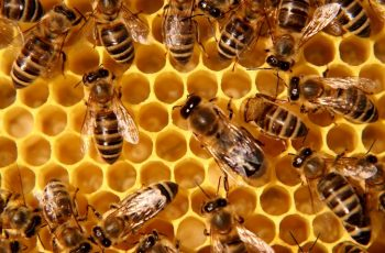 Fort Worth Bee Removal