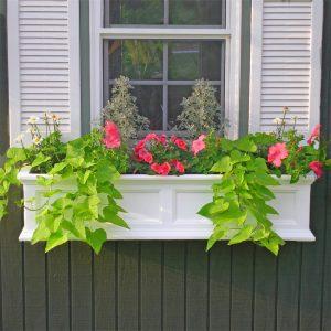 windows planter