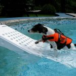 Pool Stairs for Dogs